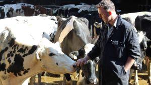 Jordbrukaren Rob Warnock med sina kor.