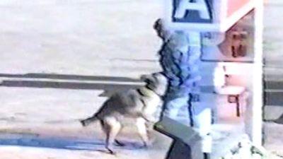 Polisen bussar en hund på gärningsmannen i gisslandramat i Borgå 2002