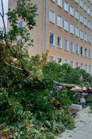 Träd har fallit i stormen vid Åbolands sjukhus i Åbo.