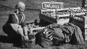 vanhassa kuvassa nainen nostaa käsittelemässä nostettuja perunoita. Jälkikäsittelyssä kuvaan on lisätty piirtämällä sanat tarjous, kotimaista perunaa ja 1e/kg