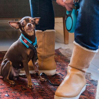 Pieni koira istuu ravintolan lattialla ihmisen jalkojen juuressa. Ihmisellä on kädessään koiran talutushihna.