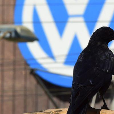 Mustarastas valokuvattuna Volkswagenin logon edessä Wolfsburgissa, Saksassa, 26. syyskuuta.