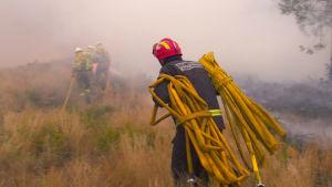 Palomies maastossa kantamassa letkua.