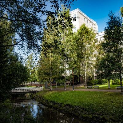 Snellmanninpuiston remontti