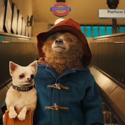 Björnen Paddington med en liten hund i sin väska.