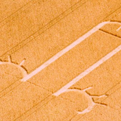 Mönster av eregerad penis i en åker.