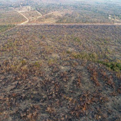 Poltettua metsää Brasilian Mato Grossossa.