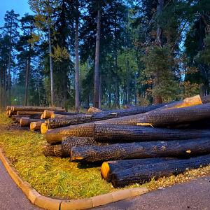 Eldhärjade stockar i Östanåparken i Nickby i Sibbo 08.10.21