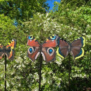 Kolme perhosia.