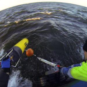Kaksi miestä heittävät mittauslaitetta veneestä mereen. Aurinko on laskemassa.