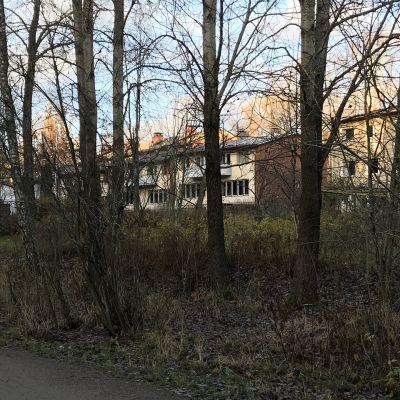 Maunulassa taloyhtiöiden pihat rajautuvat kävelytiehen, jonka vierestä alkaa Keskuspuisto.