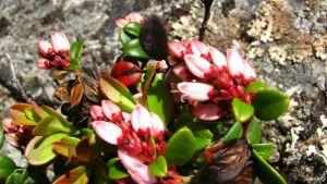 Erikoinen kasvi Luontoillan kysymyksissä
