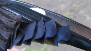 Stenknäckens vingfjädrar