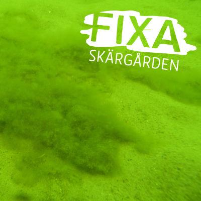 Död havsbotten i Östersjön