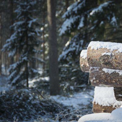 Lumen verhoama puupino, taustalla oksia lumella hakkuun jäljiltä.