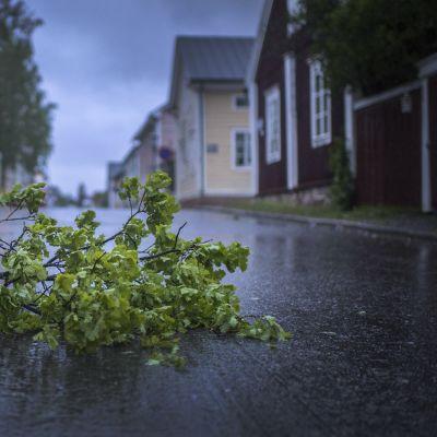 Tammenoksa kadulla Kokkolan vanhassakaupungissa Neristanissa Salomo-myrskyn jäljiltä.