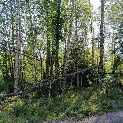Telefonlinje med träd hängande över.