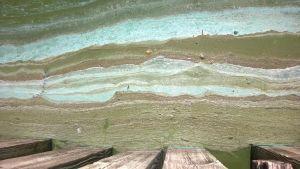 Algblomning väster om Kirjais i Nagu.