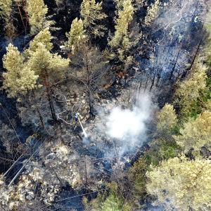 Bild ovanifrån. Människor släcker markbranden i skogen.