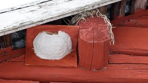 En fågelholk för hussvalor byggd av betong och rödmåladfanér. Fågelholken är uppspikad på en röd yttervägg av stock under takskägget.