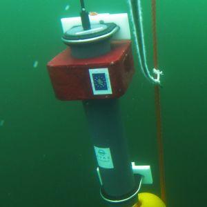 Veden alla kuvattu putkilomainen mittauslaite, jolla äänitetään vedenalaista äänimaisemaa.