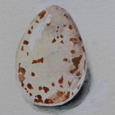 suuri valkoinen munaa kuvia porno kuvia seksikäs naisten