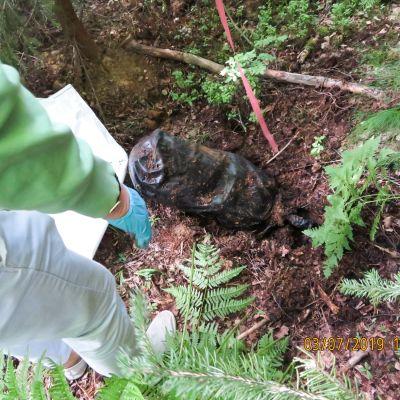Poliisi löysi heinäkuussa maastokätkön, josta takavarikoitiin useita kiloja amfetamiinia ja tuhansia ekstaasitabletteja.