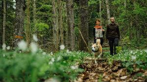 Antti ja Reetta kävelevät Karkalin luonnonpuiston keväässä.