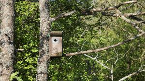 Linnunpönttö on ripustettu puun oksalle