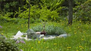 Kivikkokasviasetelma nurmikon keskellä