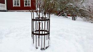 Gnagarskydd av armeringsnät runt äppelträd.