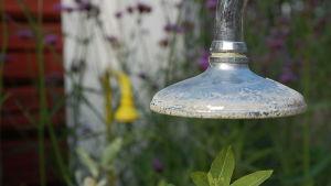 Gammalt dusch används som klätterstöd för växter