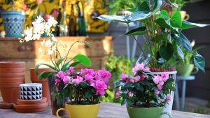 Växter renar inomhusluften