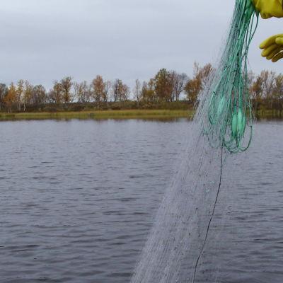 Fiskare lägger ut nät från båt