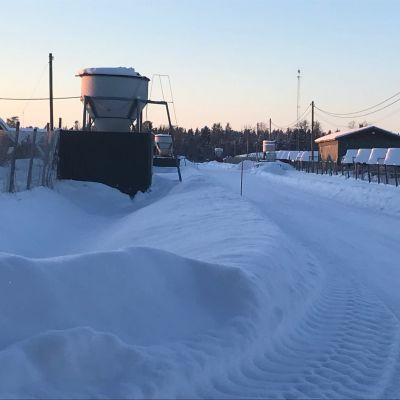 Rävvägen på farmområdet i Jakobstad
