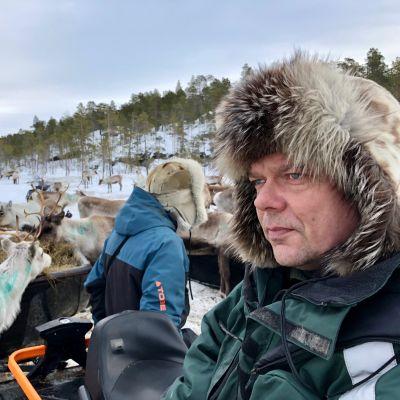 Muddusjärven paliskunnan poroja on jouduttu ruokkimaan ennätysmäärä tänä talvena.  Varaporoisäntä Leo Aikion paliskunta kamppailee olemassaolostaan metsähakkuiden heikentämien laitumien ja ilmastonmuutoksen kourissa. Inari 10.3.2020.