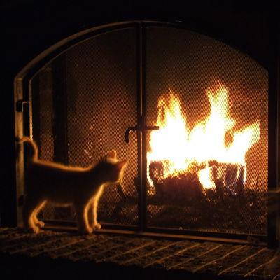 Katten tittar på elden.