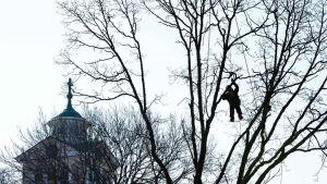 man hänger i träd i Ekenäs