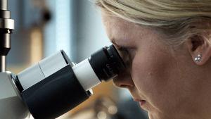 Reetta Kivelä tittar i sitt mikroskop.