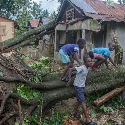Barn står vid fallet träd i Lakil de Leogan, Haiti.
