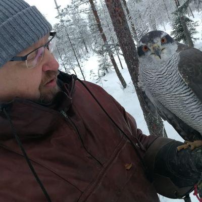 Metsästyshaukka Lotta ja omistajansa Markku Kallinen.