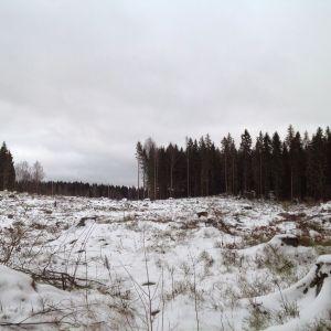 Nedhuggad skog i vårberga