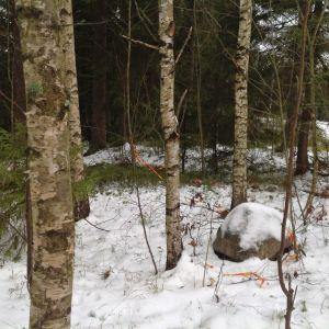 Vårberga skog