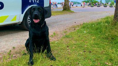 polishund i Hangö