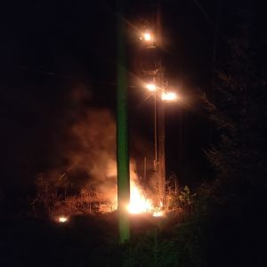 Transformator brinner i en skog.