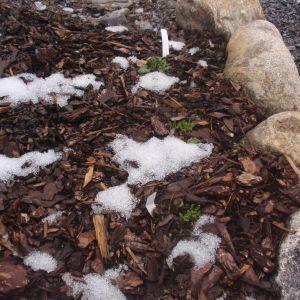 En rabatt med snö.