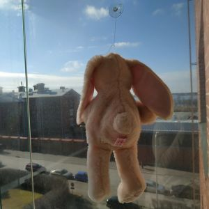Nalle i ett fönster i Vasa.