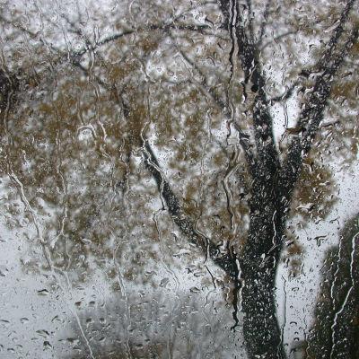Puu sadeikkunan takana