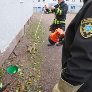 brandmän räddar hare