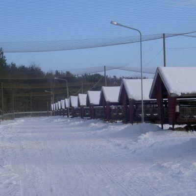 Arkivbild från Finlands Pälsdjursuppfödares Förbund